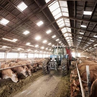 کشاورزی و دام داری  - agriculture and livestock